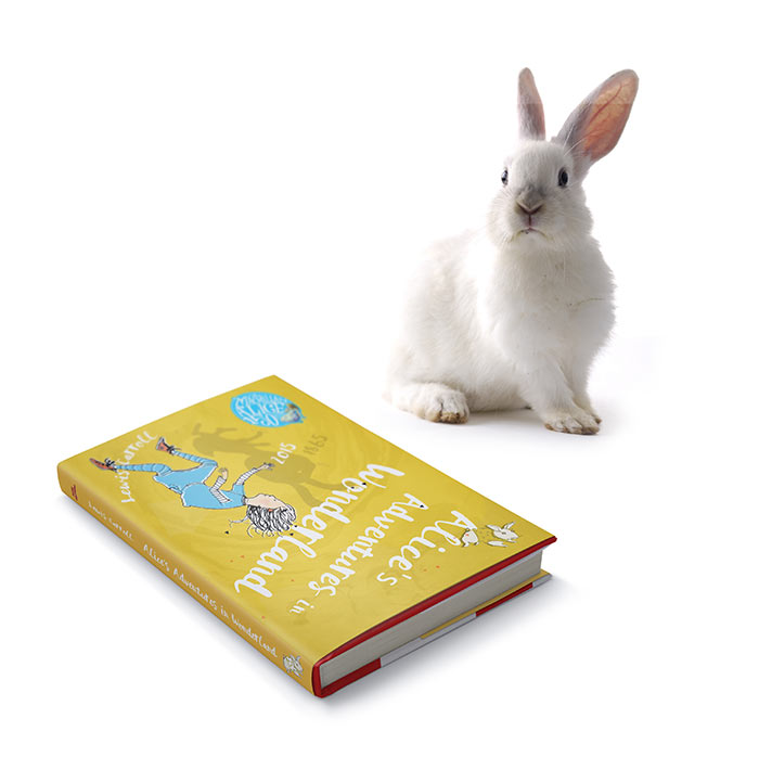 Alice Book and rabbit