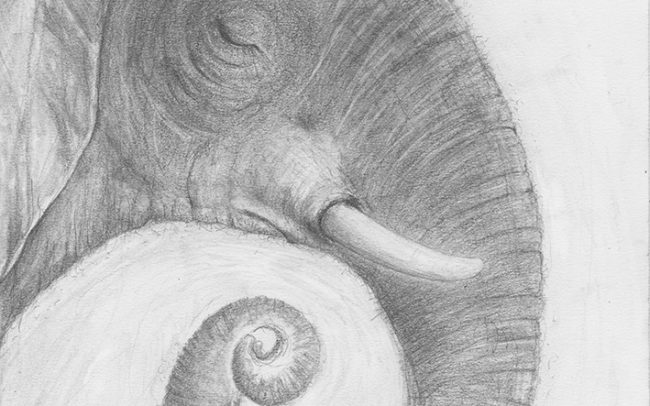 pencil drawing of an elephnt head in profile with a snail shell on his trunk