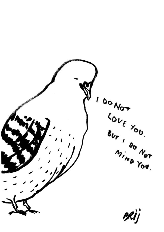 Ink drawing of a pigeon with the words I do not love you but I do ot mind you